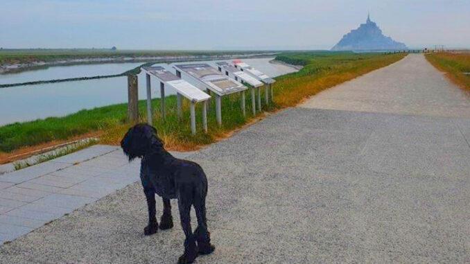 Jürgen Breuer mit Hund am Mont-Saint-Michel. Foto: Jürgen Breuer