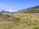 Ziehen frei über die Almen: die Schafe am Col du Soulor in den Pyrenäen des Béarn. Foto: Hilke Maunder
