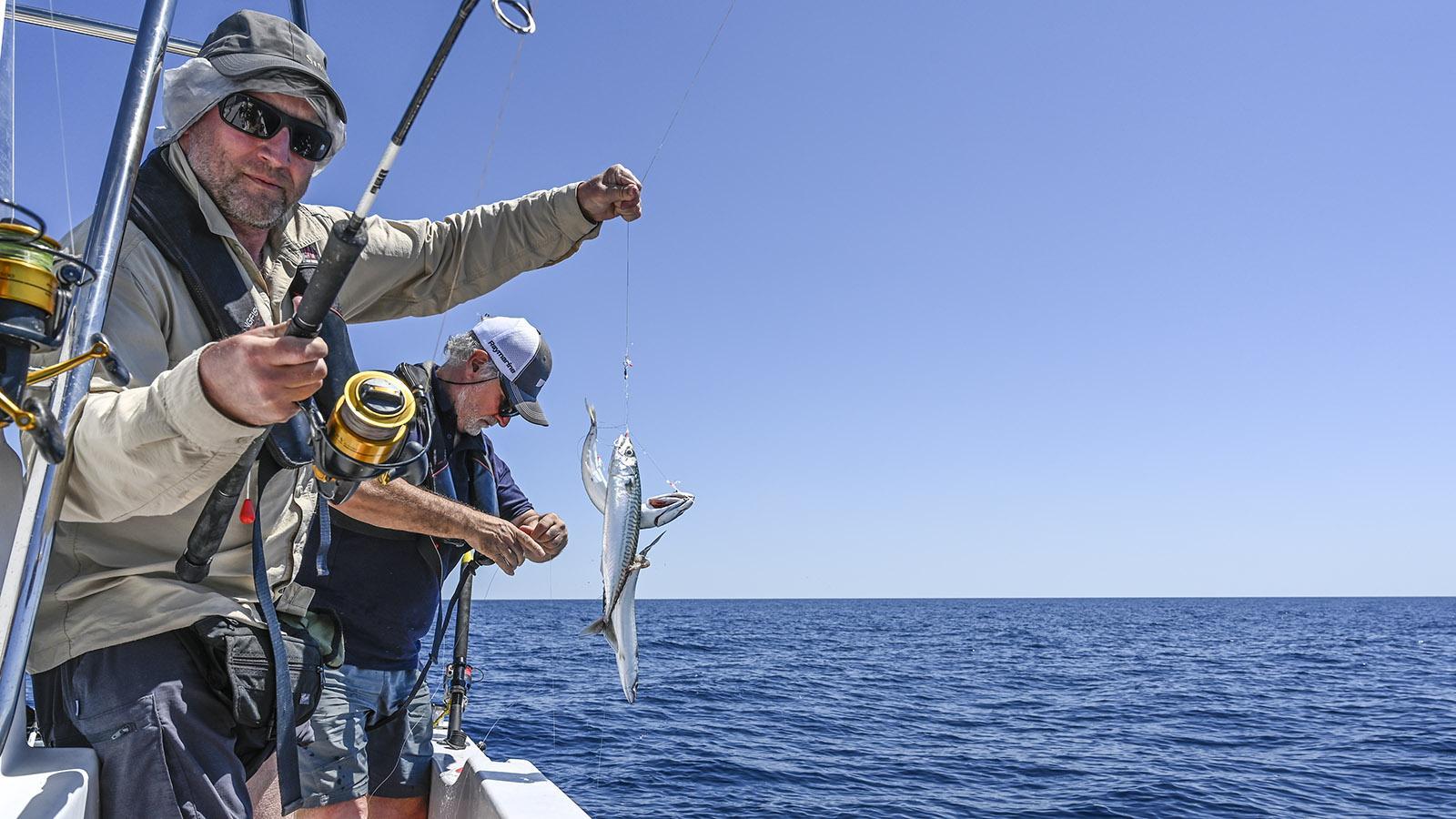 Makrelen - frisch gefangen im Mittelmeer. Foto: Hilke Maunder