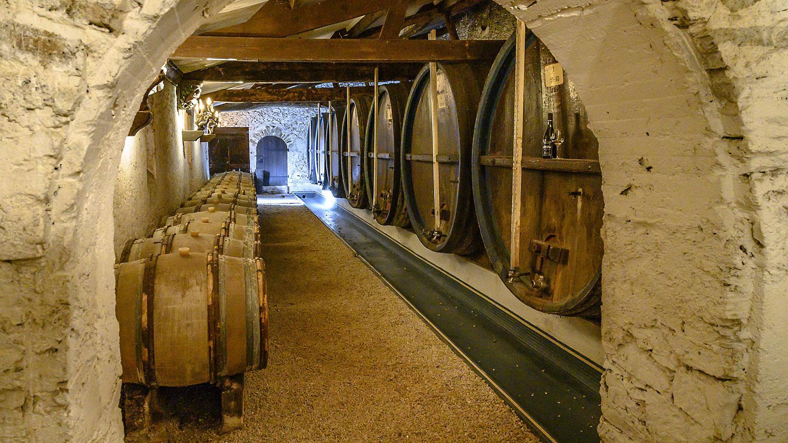 Der Muscadet-Keller von Château Cassemichère. Foto: Hilke Maunder