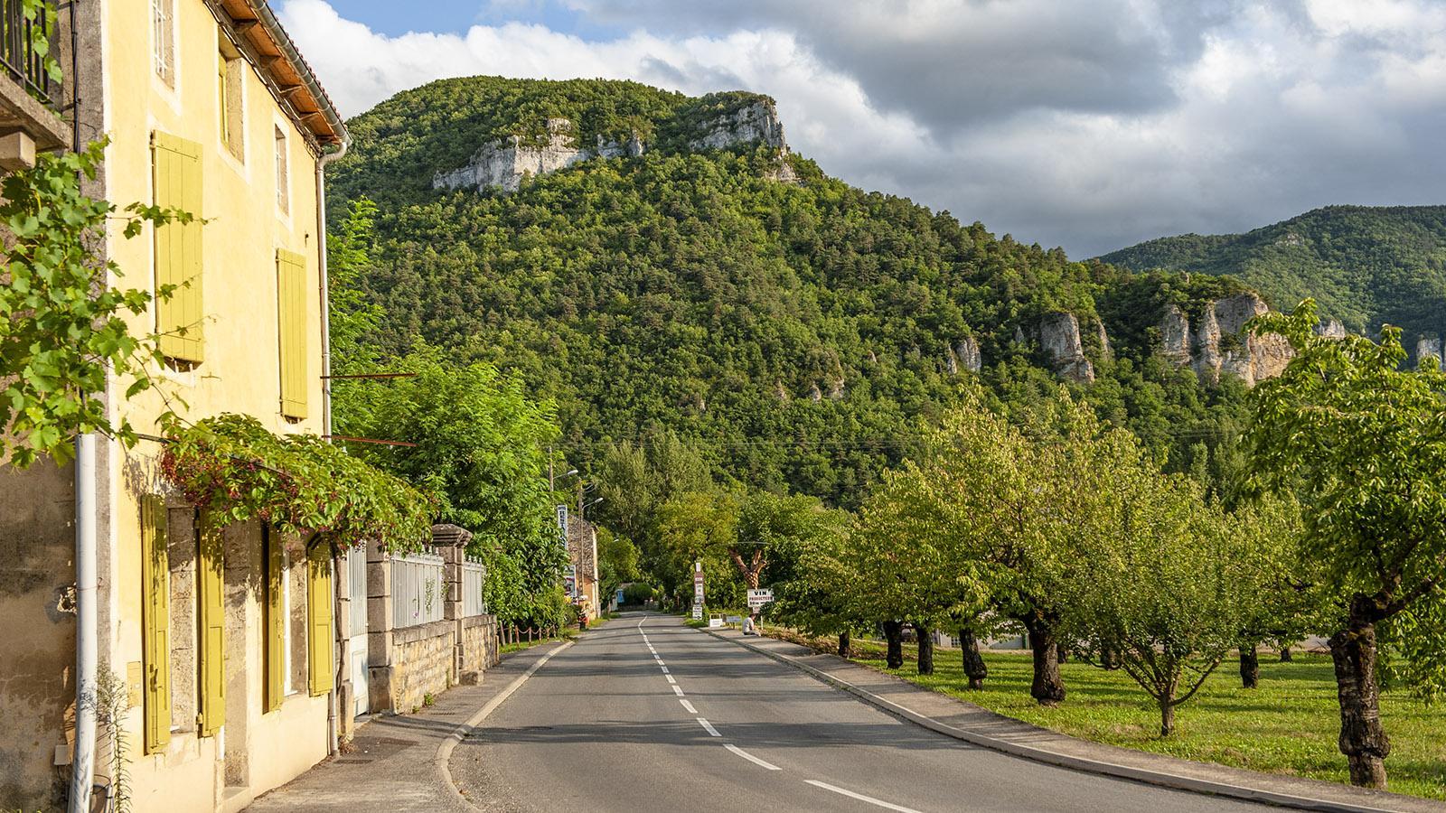 Gorges du Tarn. Foto: Hilke Maunder