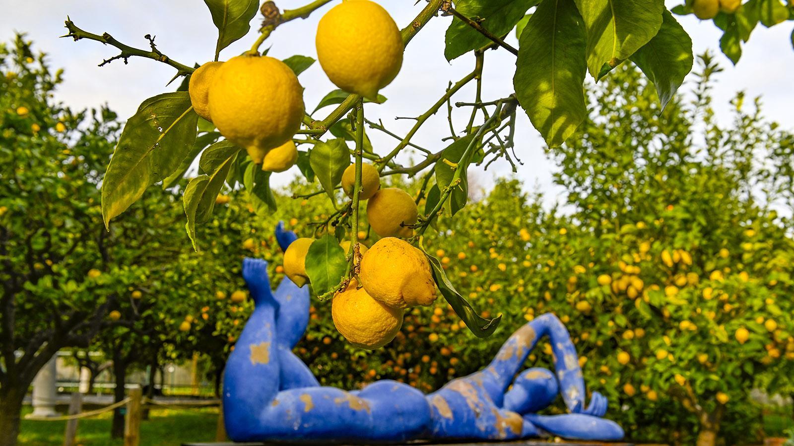 Menton: Jardin des Agrumes. Foto: Hilke Maunder