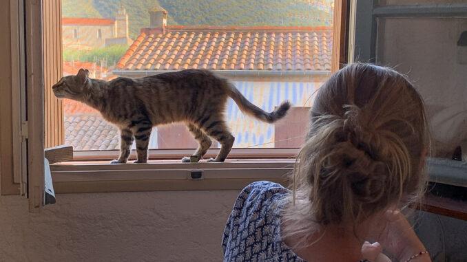 Katze, überraschend: Couscous, unser wilder, schnurrender Eindringling. Foto: Hilke Maunder