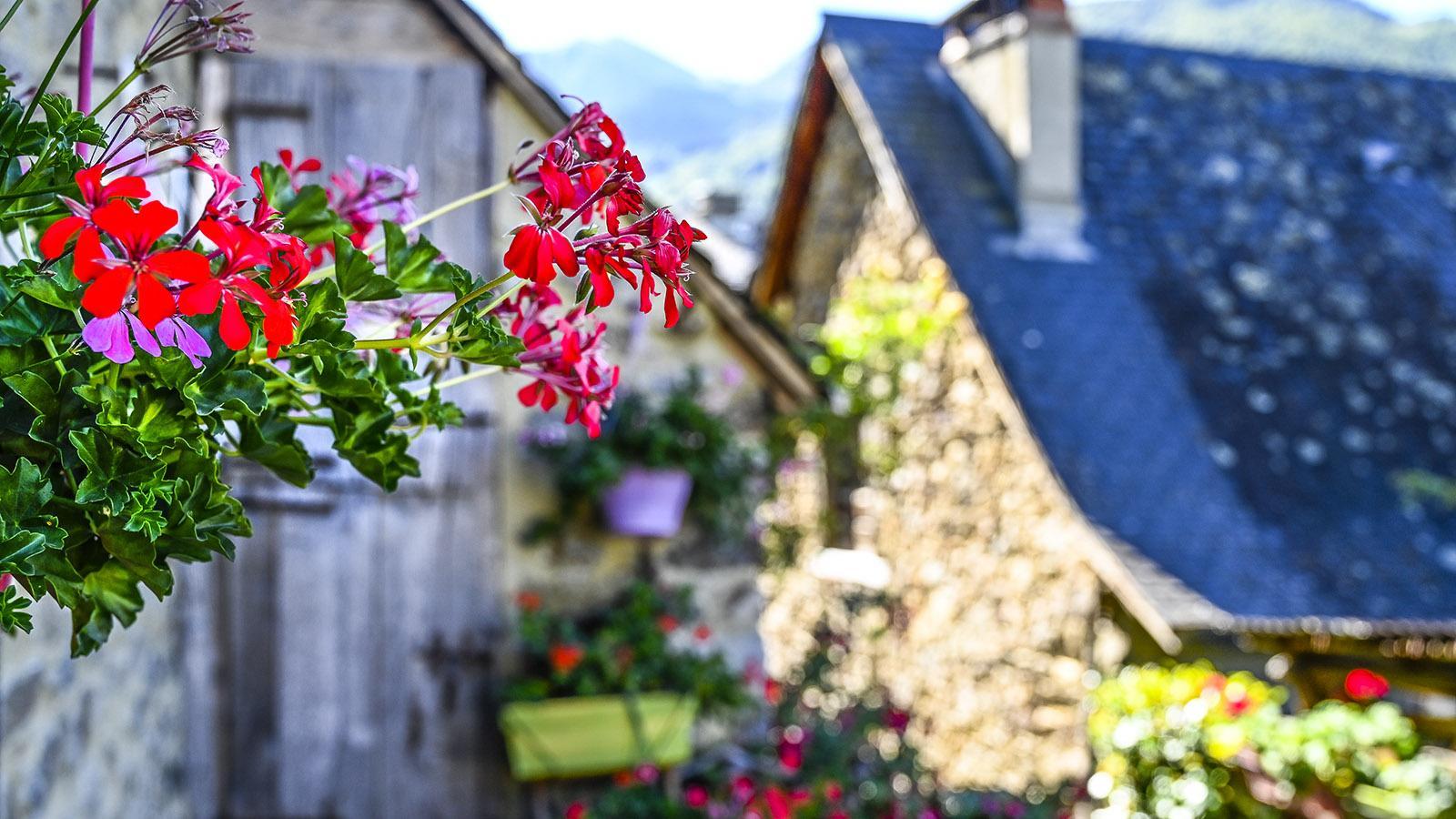 Im Sommer blühen die Geranien vor den Fassaden. Fotos: Hilke Maunder