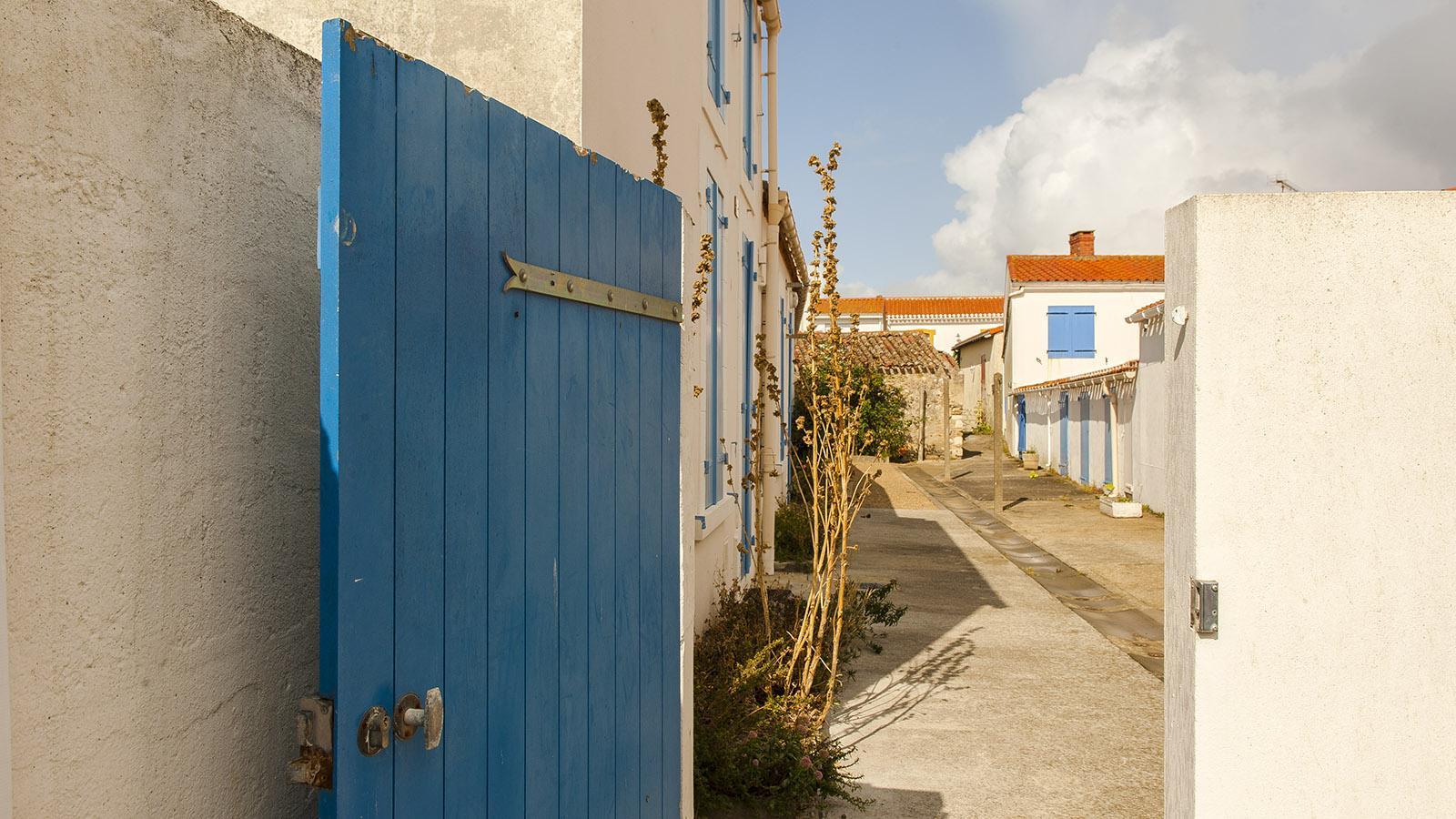 Sardine. Hof in La Croix-de-Vie. Foto: Hilke Maunder