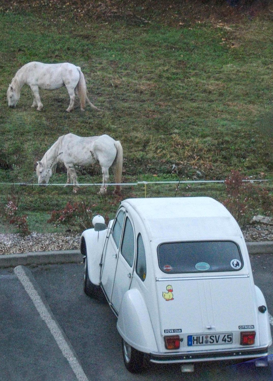 Die Pferde und ich. Foto: Sven-Uwe Schulteis