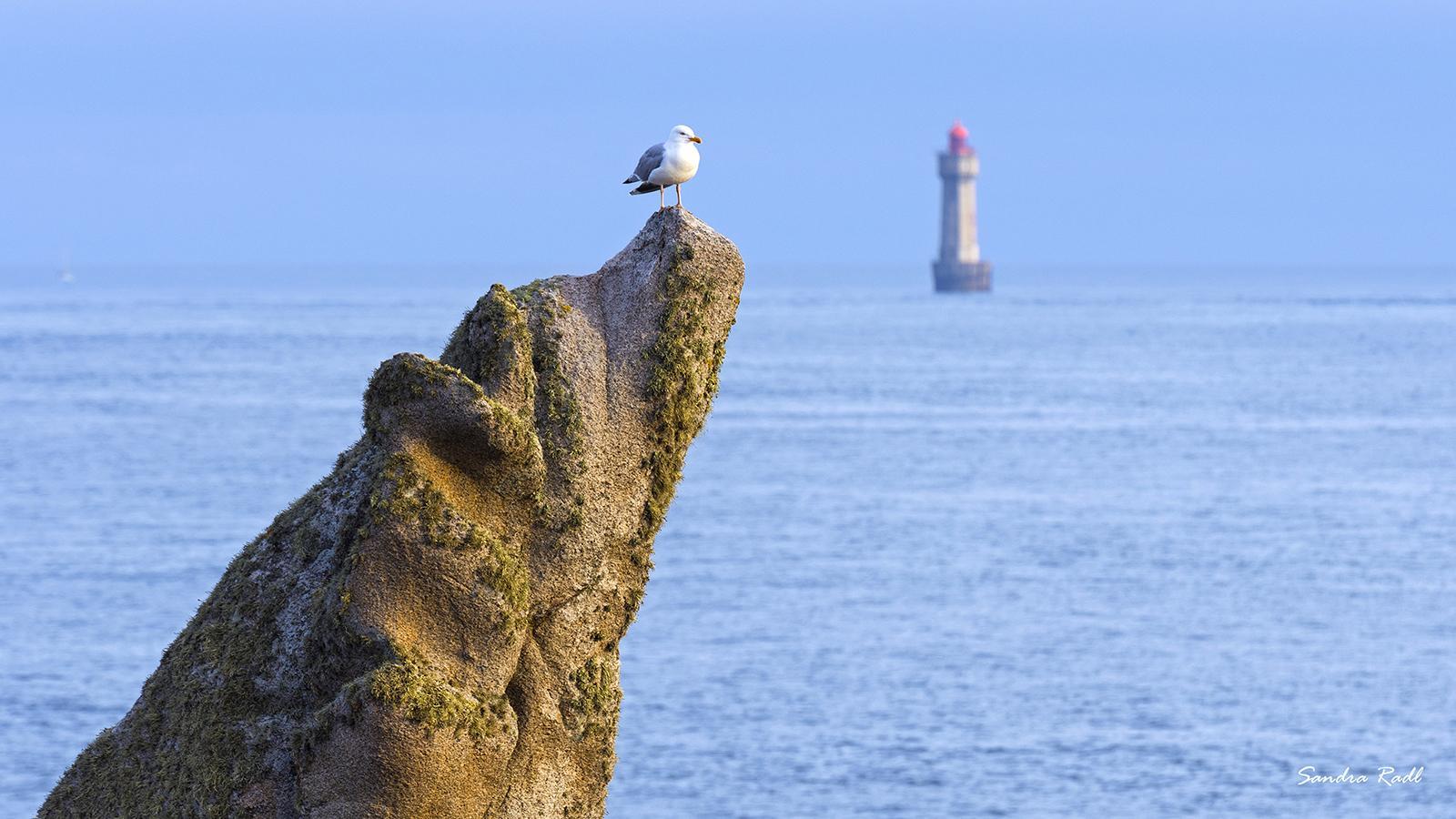 """elsen am Pointe de Pern, im Hintergrund der Phare de la Jument, bekannt aus dem Film """"Die Frau des Leuchtturmwärters"""". Foto: Sandra Radl"""