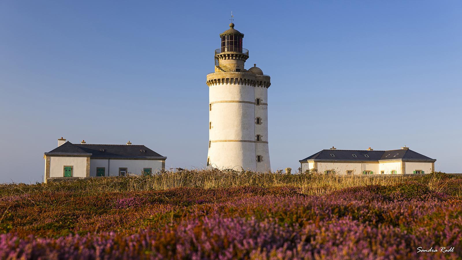 Leuchtturm Le Stiff, im Spätsommer bedeckt Heidekraut weite Teile der Insel. Foto: Sandra Radl