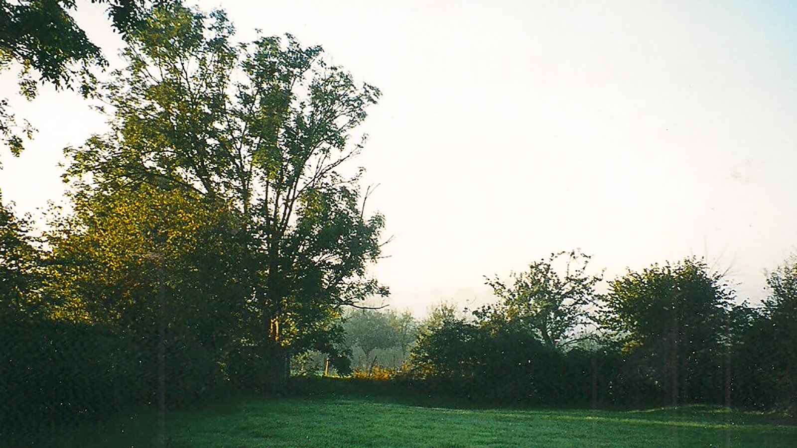 Der Blick aus dem Fenster auf unseren Garten. Foto: Jutta Fassbender
