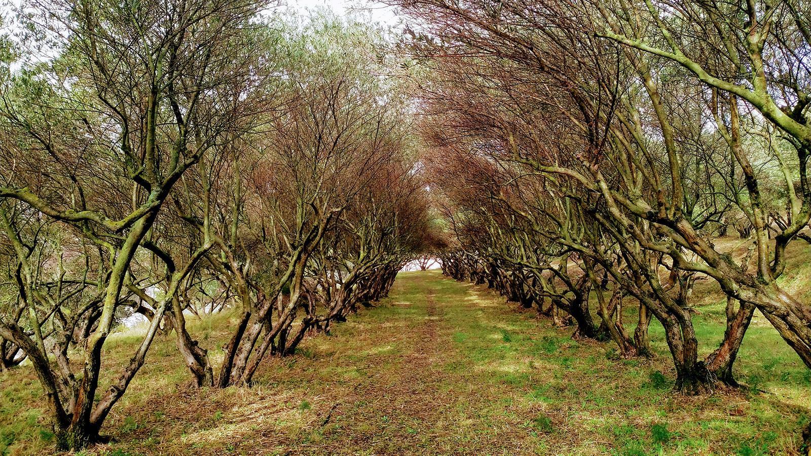 Ein Olivenhain bei unserem Dorf. Foto: Leonore Ander?