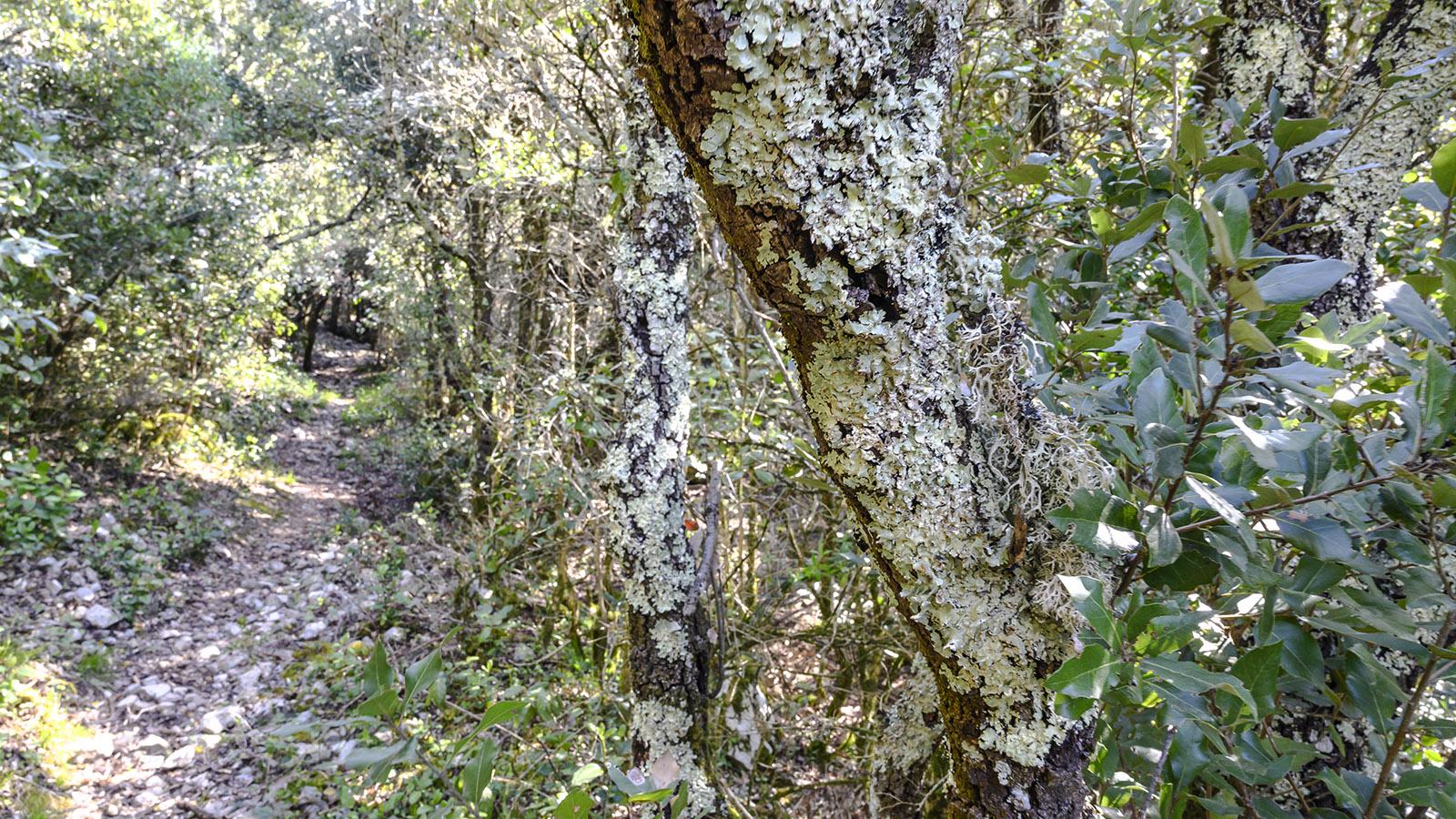 Flechten sind Indikator-Pflanzen für besonders saubere Luft. Foto: Hilke Maunder