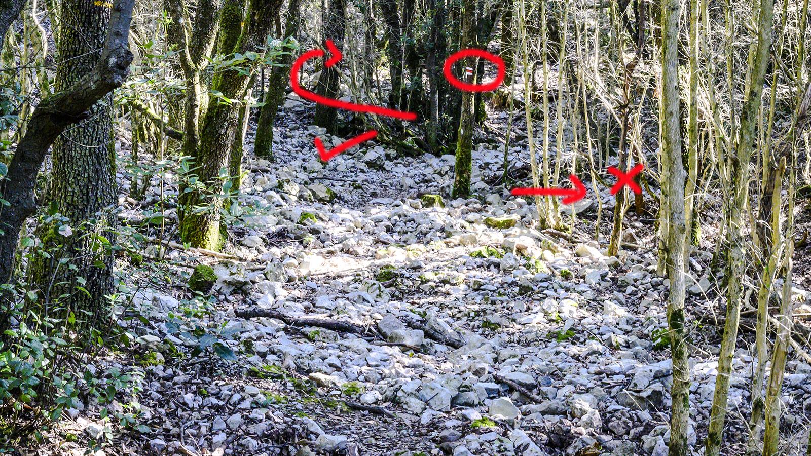 Hier nicht sofort nach rechts abzweigen, sondern erst noch rund einige Meter weiter hochgehen. bis ein deutlich erkennbarer Pfad nach rechts abzweigt! Foto: Hilke Maunder