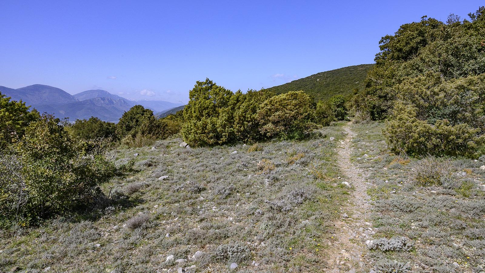 Der höchste Punkt der Wanderung: Weitblick mit Thymian am Pla de Moulis. Foto: Hilke Maunder
