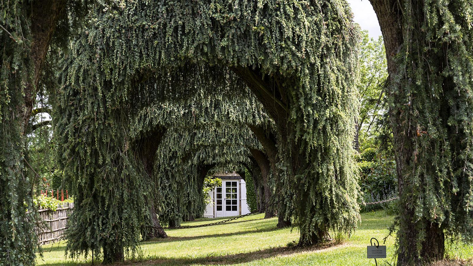 Die Gärten von Eyrignac. Foto: Hilke Maunder