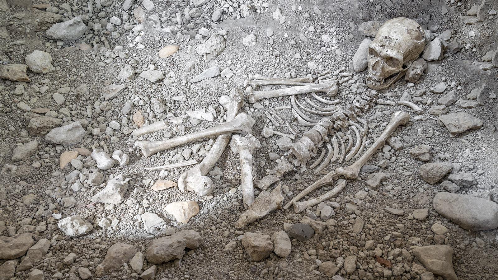 Das Neandertaler-Skelett des Museums ist eine Nachbildung. Das Original befindet sich heute im Musée de l'Homme von Paris. Foto: Hilke Maunder