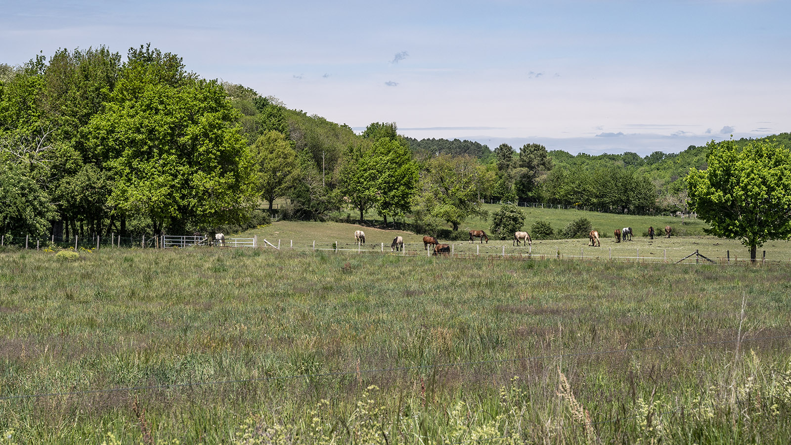 Tursac, Pferdekoppel im Vézère-Tal. Foto: Hilke Maunder