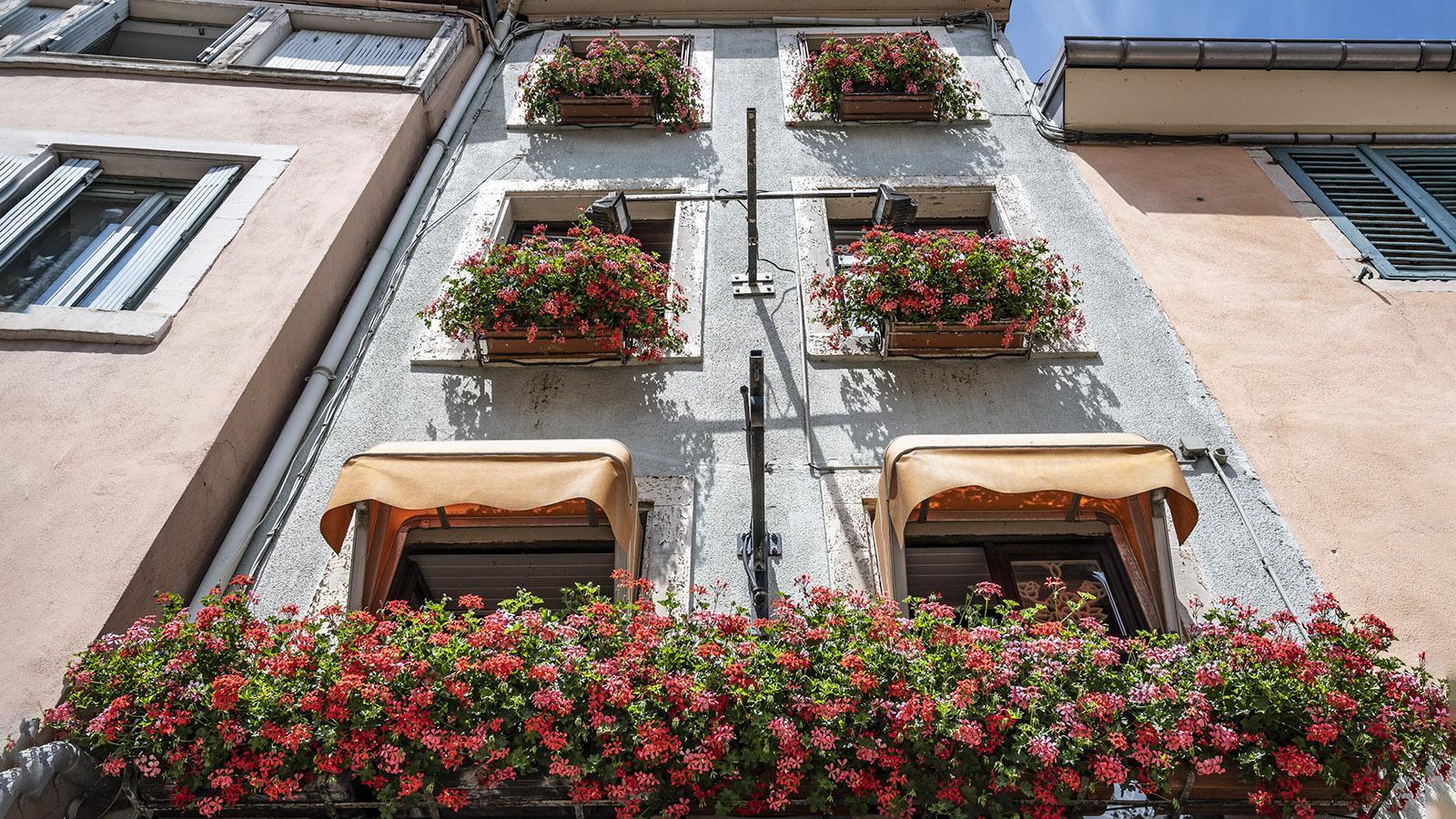 Üppig: der Geranienschmuck eines Hauses in der Rue de Belfort. Foto: Hilke Maunder