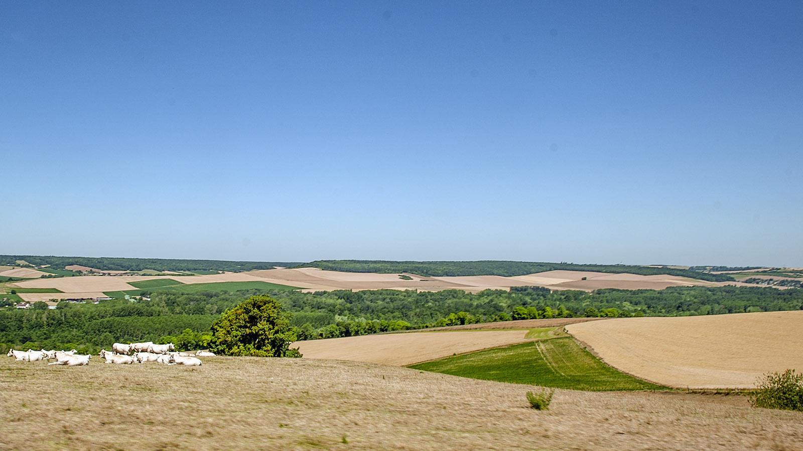Getreideanbau im Seinetal. Foto: Hilke Maunder