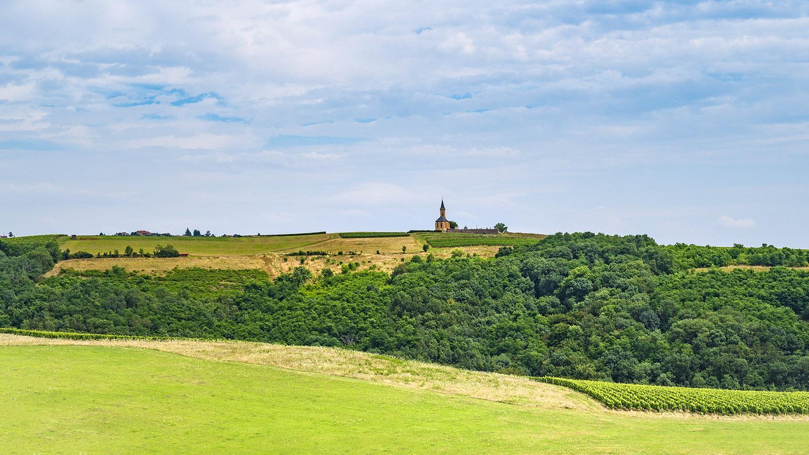Die Landschaft zwischen Oingt und Ternand. Foto: Hilke Maunder