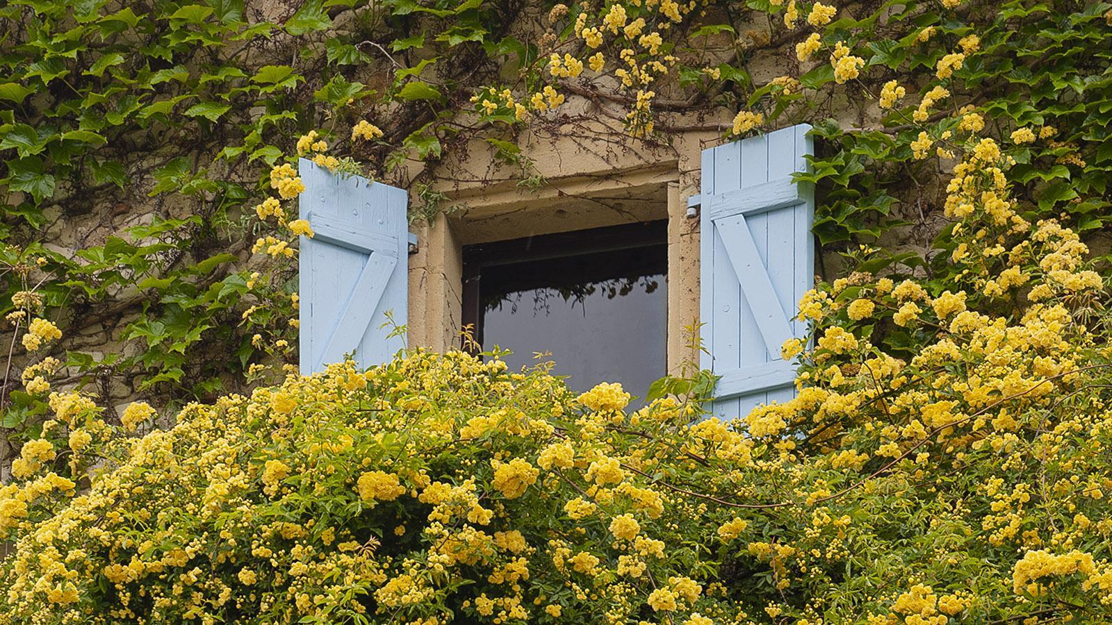 Üppig umranken Rosen dieses Fenster in Grignan. Foto: Hilke Maunder
