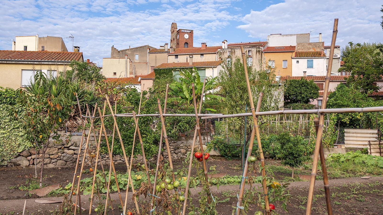 Blick über die Gärten auf Sorède. Foto: Hilke Maunder