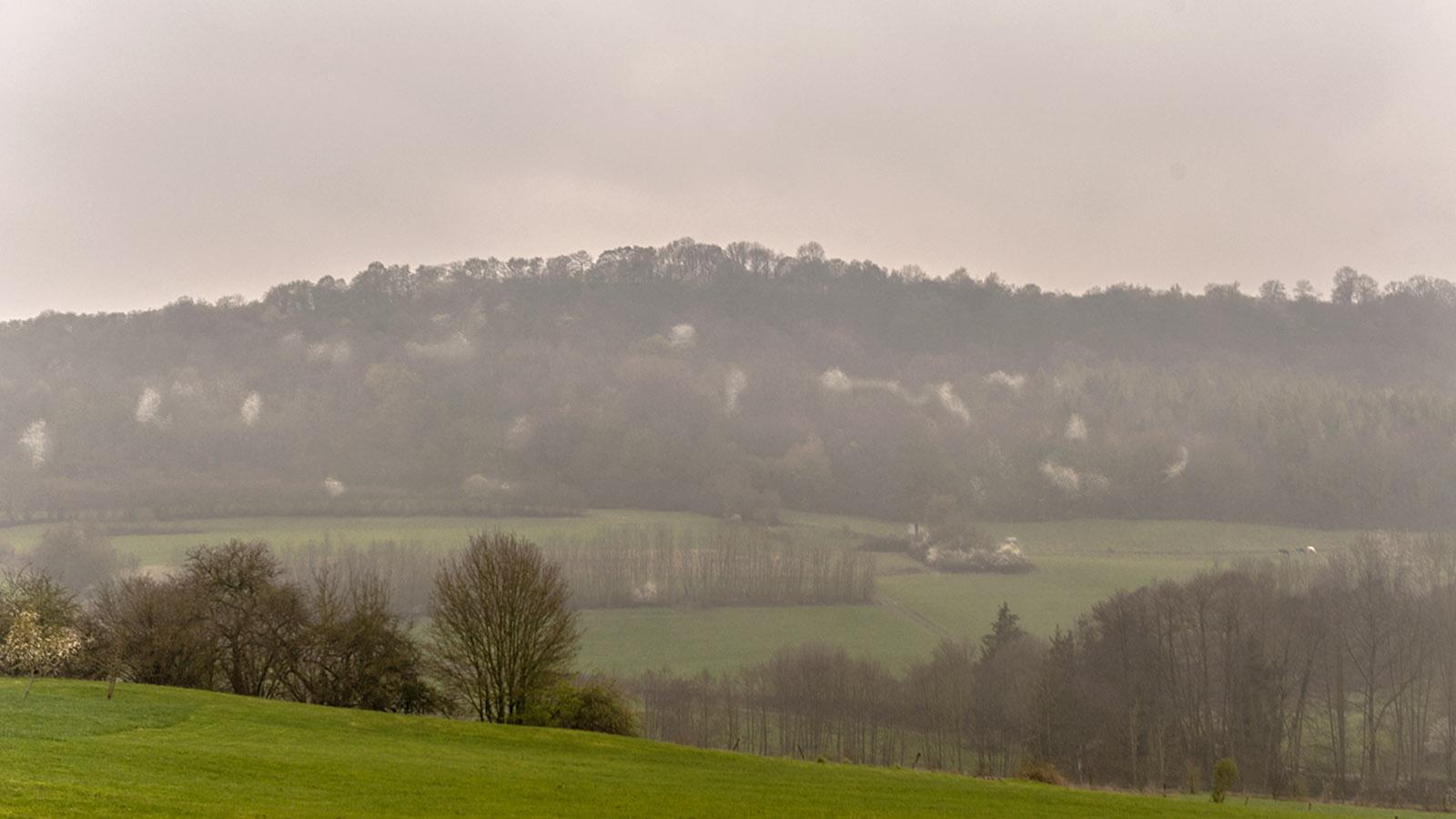 Domaine de la Klauss: Die Hügel von Montenach – blühende Obstbäumen setzen Akzente im trüben Frühlingstag. Foto: Hilke Maunder