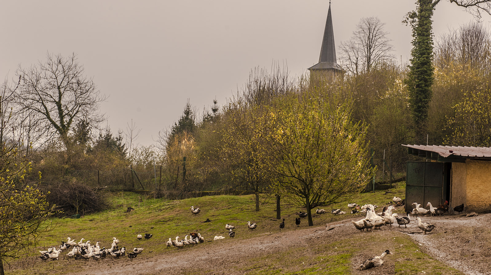 Domaine de la Klauss: Gleich hinter der Gaststätte: das Freilaufgelände für das Geflügel. Foto: Hilke Maunder