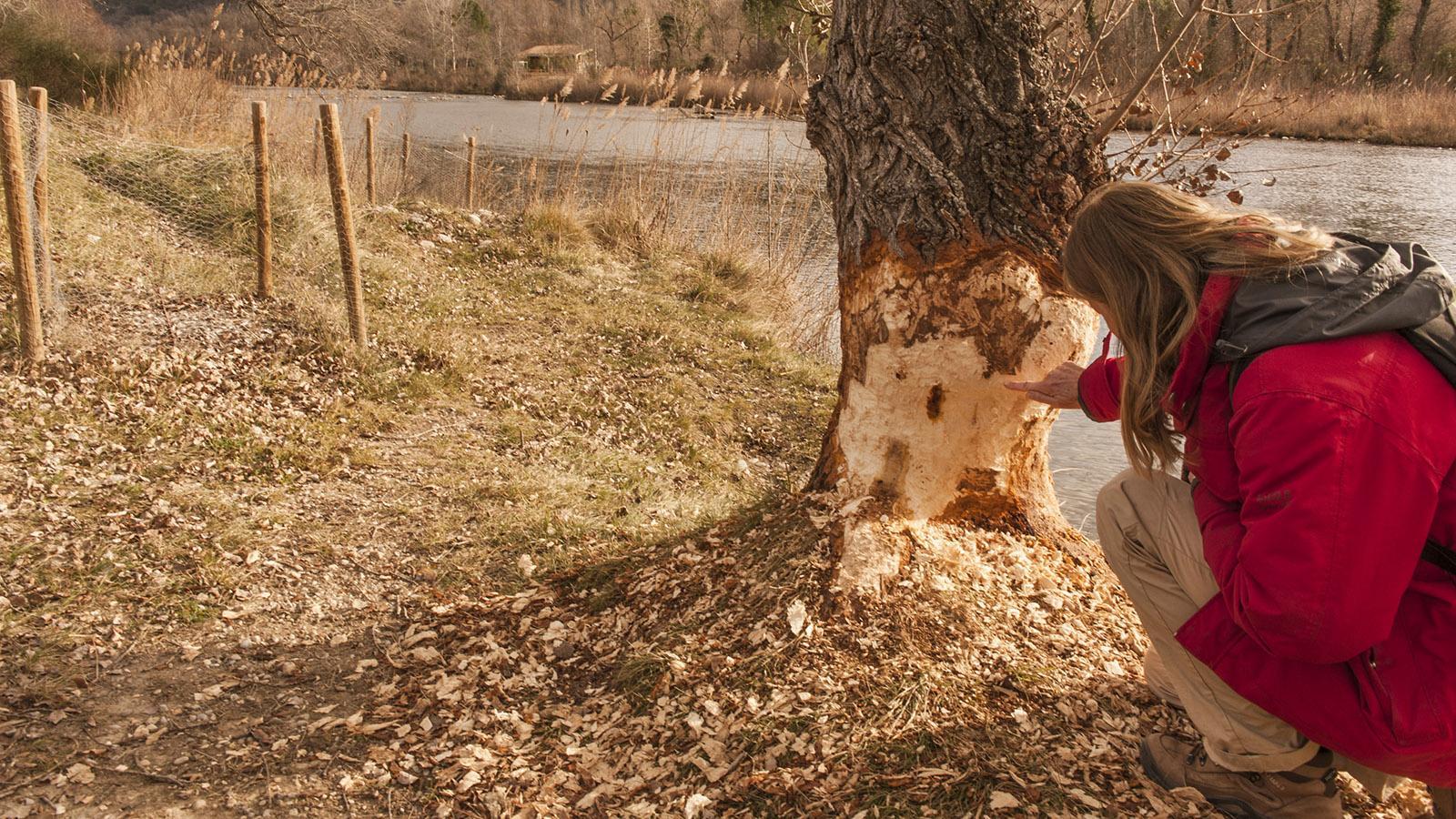 Isabelle Murach erklärt. wie - und warum - die Biber die Uferbäume fällen. Foto: Hilke Maunder
