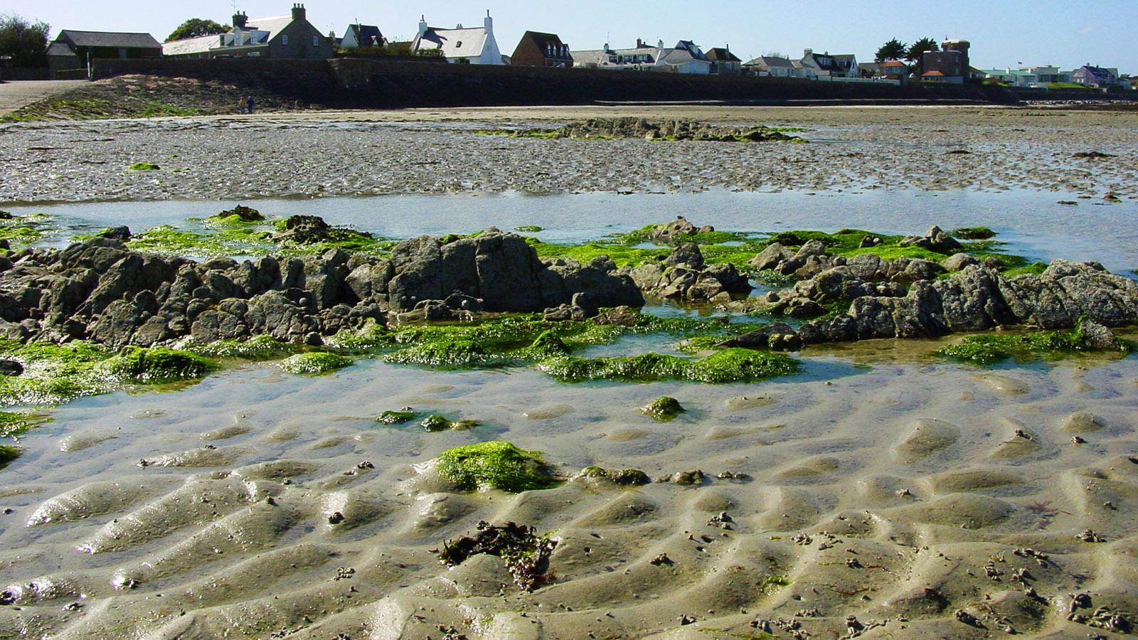 Algen. Grüne Ulva, auch Meersalat genannt. Foto: Hilke Maunder