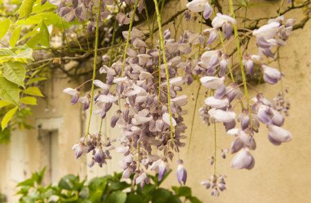 F_Bourg-Charente_Rue des Fleurs_13_credits_Hilke Maunder
