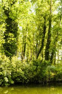 F_Charente_Hausboot_Natur_3_credits_Hilke Maunder