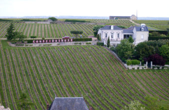 F_Chinon_Wein_Couly-Dutheil©Hilke Maunder