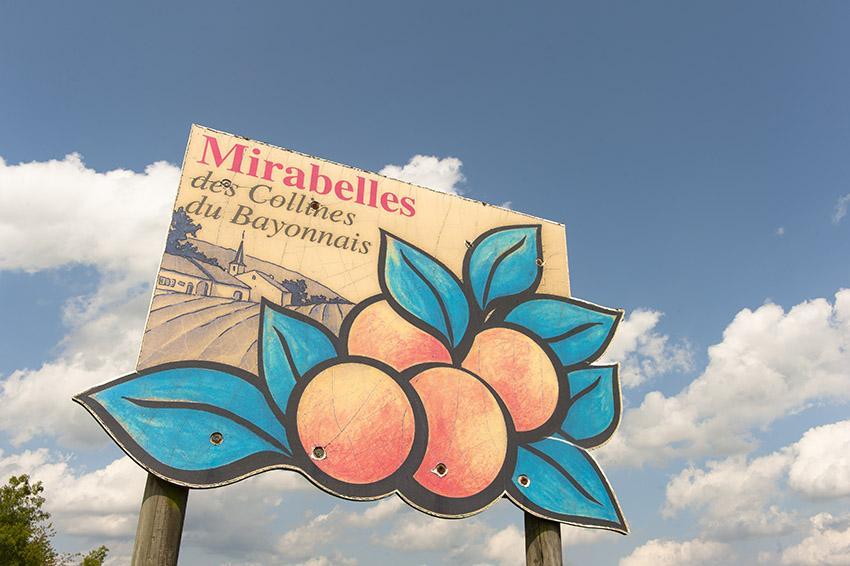 Collinnes du Bayonnais: Mirabellen