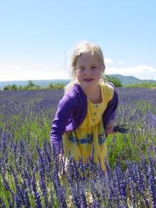 F_Drôme_Ferrassières_Lavendel_credits_Hilke MAUNDER