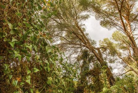 F_Ile Sainte-Marguerite_Vegetation_1_credits_Hilke Maunder