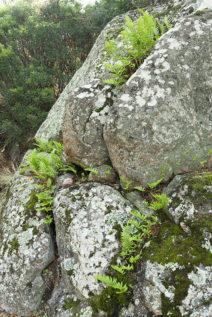 f_korsika_parc-de-saleccia_granit_farn_hilke-maunder
