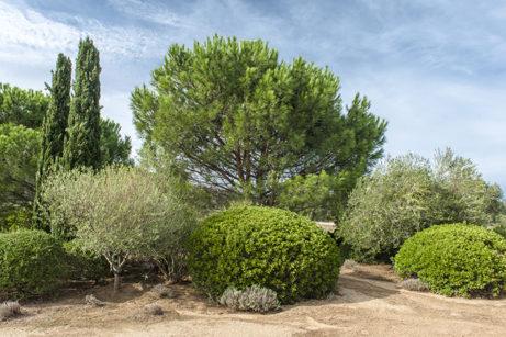f_korsika_parc-de-saleccia_macchia_typische-vegetation_1hilke-maunder