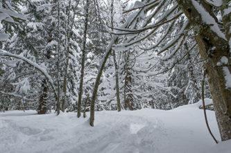 F_Les Gets_Mont Coty_Winter_Wald_©Hilke Maunder