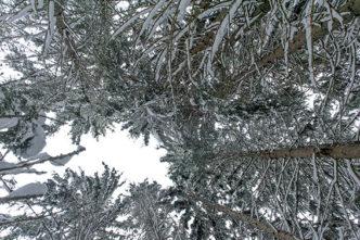 F_Les Gets_Mont Coty_Winter_Wald_2©Hilke Maunder