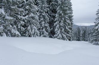 F_Les Gets_Mont Coty_Winter_Wald_3©Hilke Maunder