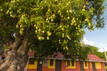 F_Martinique_Tartane_8_credit_Hilke Maunder