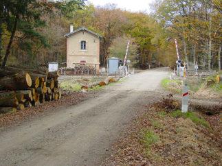 F_Montaigur sur Save_Forêt de Bouconne_©Hilke Maunder