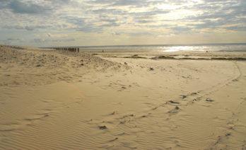 F/Pas-de-Calais/Opalküste/Berck-sur-Mer: Dünen und Strand