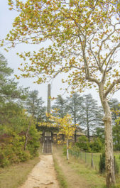 F_Naurouze_Obelisk_Platanen©Hilke Maunder