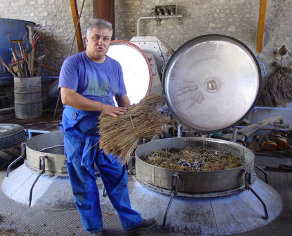 F_Nyons_Distillerie Bleu Provence_Philippe Soguel_Lavendel_1_credits_Hilke Maunder