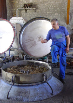 F_Nyons_Distillerie Bleu Provence_Philippe Soguel_Lavendel_2_credits_Hilke Maunder