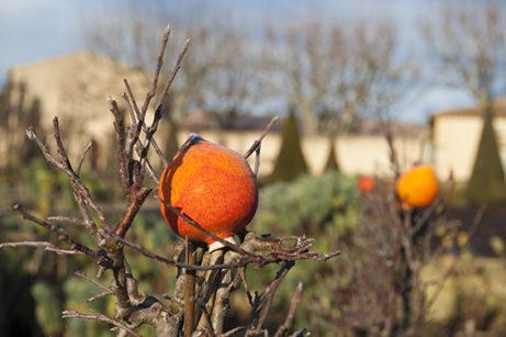 F_Pertuis_Val Joanis_Garten_Keramik_Orange©Hilke Maunder