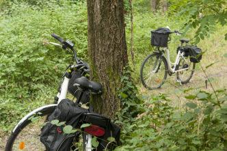 f_printegarde_rad_into-the-woods_2hilke-maunder