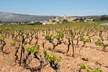 F/Provence/Bouches du Rhône/Montagne Sainte-Victoire: Pourrières