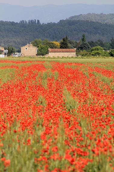 F_Provence_bei Coustellet_©Elke Burkart